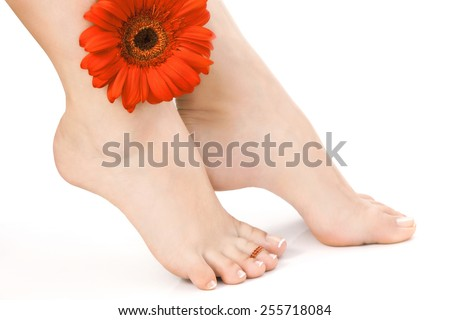 Sexy Female Naked Feet with French Pedicure over white Background with Red Gerbera  - stock photo