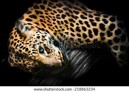 sexy leopard portrait - stock photo