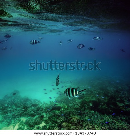 Seychelles, coral and fish under water - stock photo