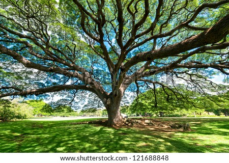 Big Tree Stock Images Royalty Free Images Amp Vectors