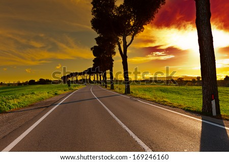Shade of the Trees on a Paved Road in Tuscany - stock photo