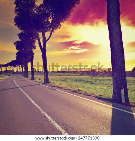 Shade of the Trees on a Paved Road in Tuscany, Instagram Effect - stock photo