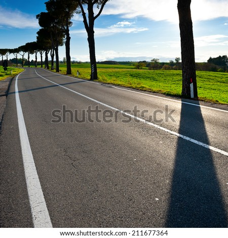 Shade of the Trees on a Paved Road in Tuscany, Italy - stock photo