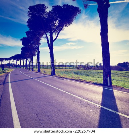 Shade of the Trees on a Paved Road in Tuscany, Italy, Instagram Effect - stock photo