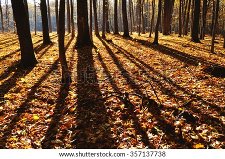 shade of trees in the forest panoramic - stock photo