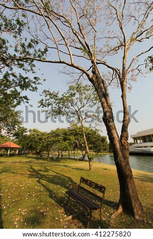 Shade trees - stock photo