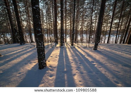Shades from trees in winter wood on the bank of lake - stock photo