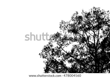 Shadow of a tree silhouette on white background.