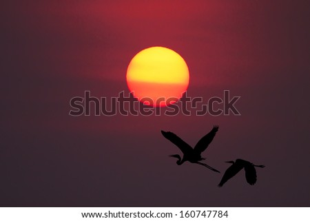Shadow of an Birds flying to the sun by red sunset over the ocean - stock photo