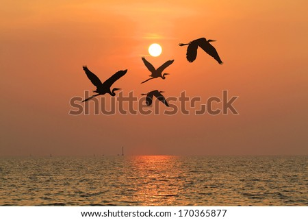 Shadow of an Birds flying to the sun by red sunset over the ocean,concept
