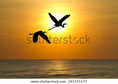 Shadow of an Birds flying to the sunset over the ocean