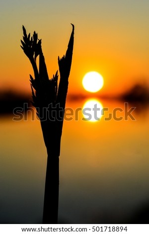Shadow of grass on the Sunset