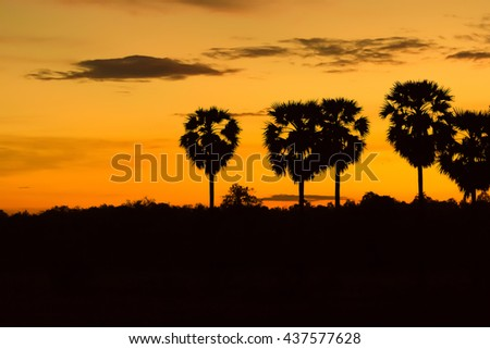 Shadow of palm at sunset.