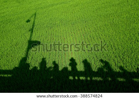 Shadow of people on paddy field