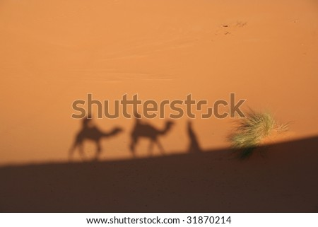 Shadow of the camel caravan. Erg Chebbi, Merzouga, Morocco.