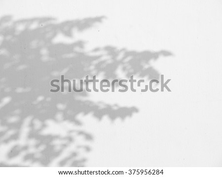 shadow of the leaves on a white wall - stock photo