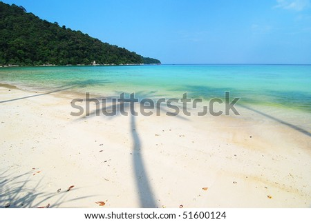 shadow of three coconut tree - stock photo
