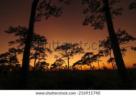 shadow sunset - stock photo