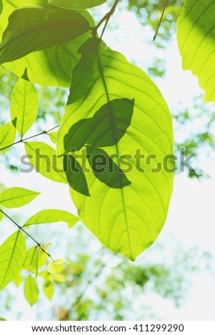 shadow with light on green leaves and sky background, vintage tone
