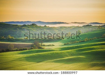 Shadows and waves in the Tuscan fields