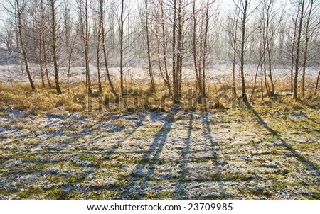 Shadows from the trees on snowy field