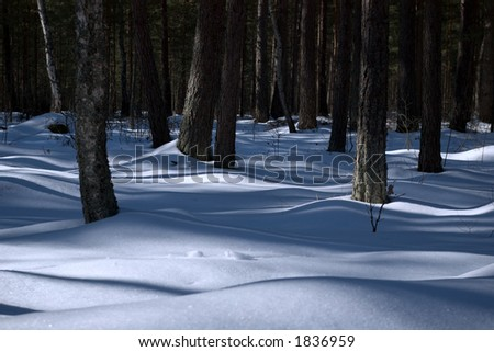 shadows in the winter forest - stock photo
