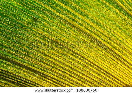 Shadows lighting effects  of leaves  palm - stock photo