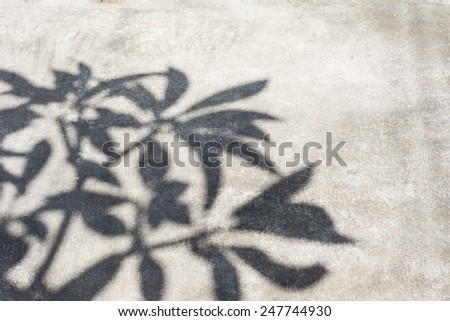 Shadows of the trees on the ground - stock photo