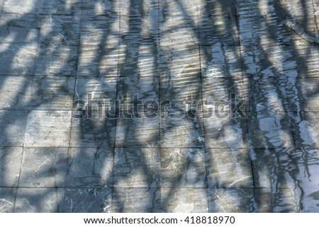 Shadows of trees in water