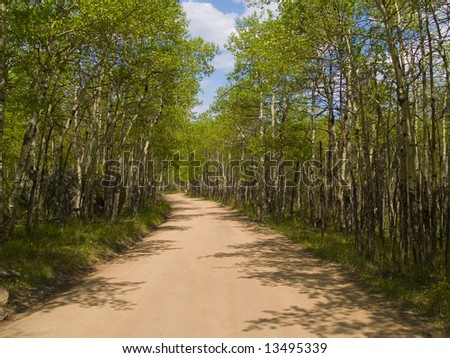 Shadows on a spring view of a road through an aspen grove in the Colorado Rockies. - stock photo