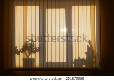 Shadows Silhouette On The Venetian Blinds. Window Backlight