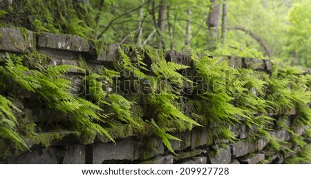 shady wall of walkway with ferns - stock photo