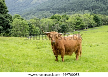 Shaggy haired and long horned Highland cow stands in a grassy field with beautiful woodland and forested hills background - stock photo
