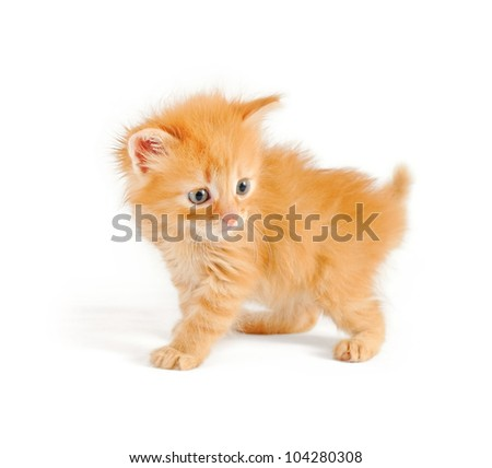 shaggy red kitten, isolated on white background - stock photo