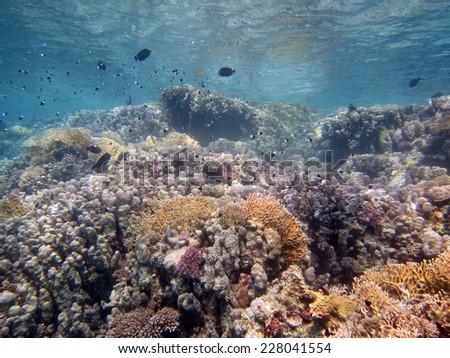 Shallow coral landscape, Marsa Alam - stock photo