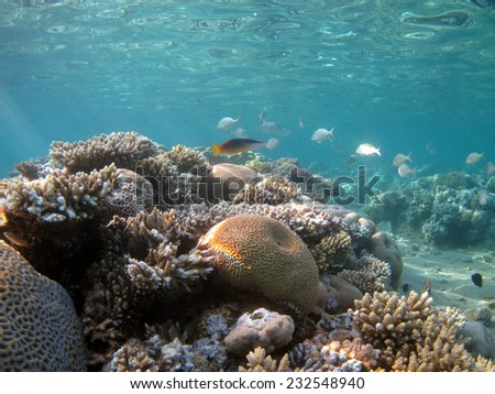 Shallow corals in a lagoon - stock photo