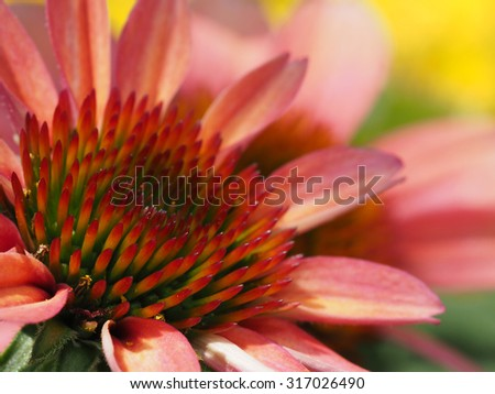 Shallow Depth of Field Closeup of a Corn Flower Blossom - stock photo