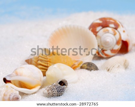 Shallow focus on diagonal line of little seashells and white sand