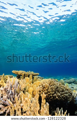 Shallow water hard corals on a tropical reef - stock photo