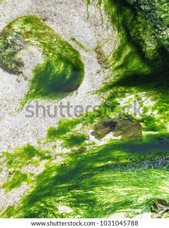 shallow water seaweed