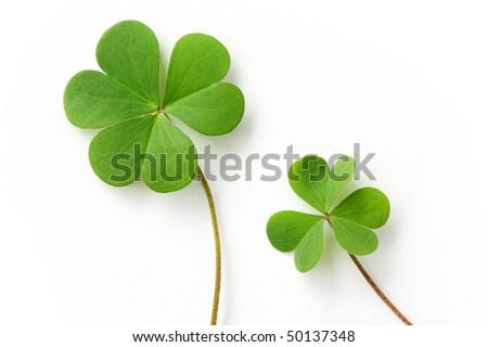 Shamrock,three leaf clover - stock photo