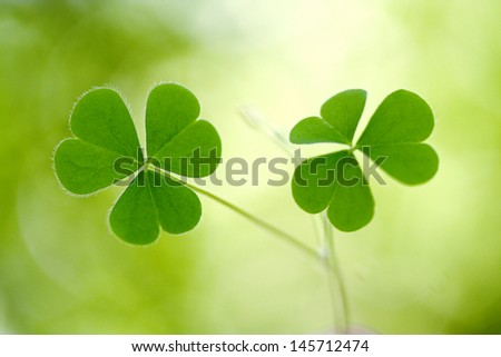 Shamrock - Three leaf clover against green background - stock photo