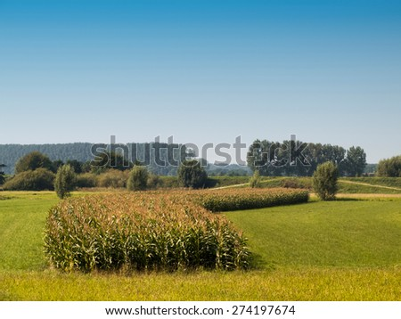 Shaped cornfield on farmland against clear blue sky - stock photo