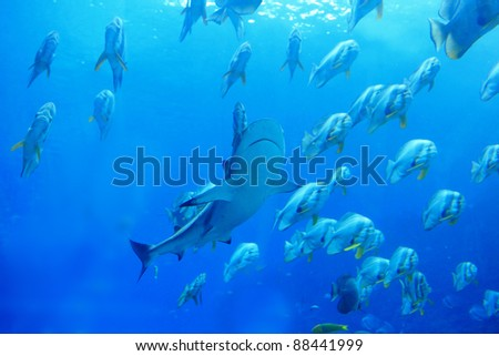 Shark and fish in the blue ocean - stock photo