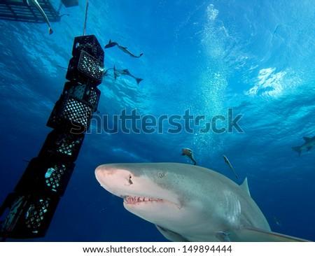 Shark circling the boat - stock photo