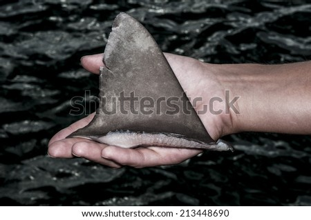 Shark Fin in Hand - stock photo