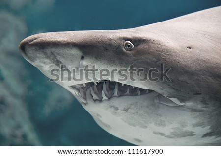 Shark fish - stock photo