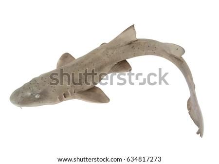 stock-photo-shark-fish-on-white-backgrou