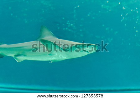 Shark floating in the sea, underwater sea life - stock photo