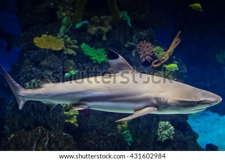 Shark in the aquarium in Barcelona